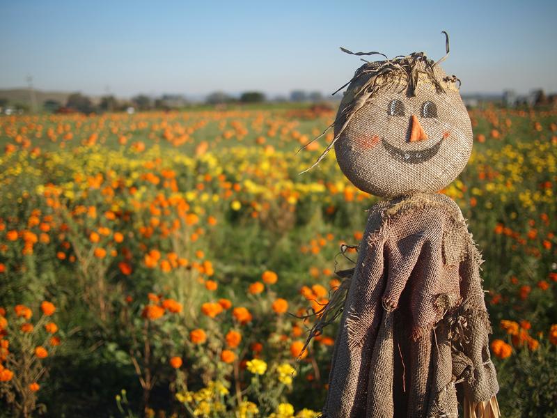 Pumpkin Patch 20111027_5009