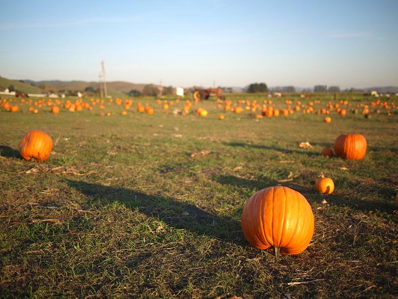 Pumpkin Patch 20111027_5101