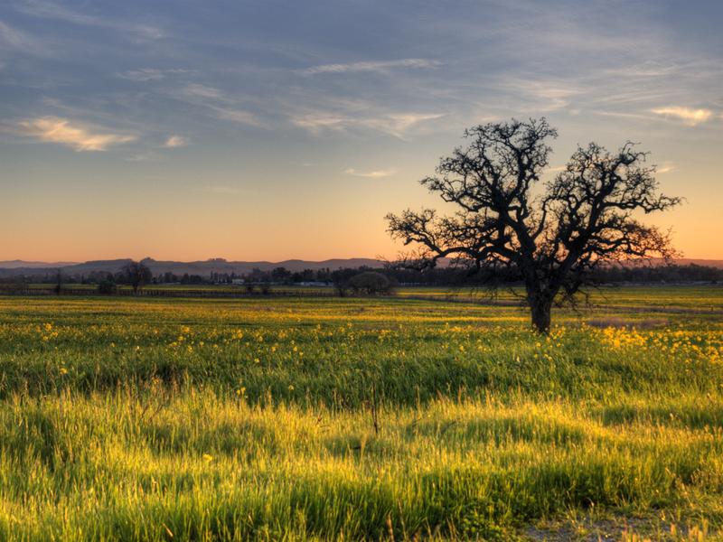 Un arbre dans le champs 20120222_8477_2