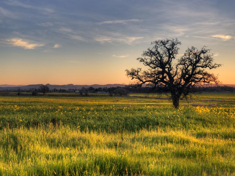 Un arbre dans le champs 20120222_8477_3